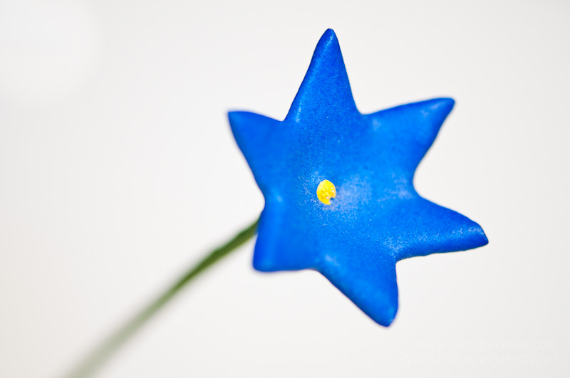 365 Blue Flower