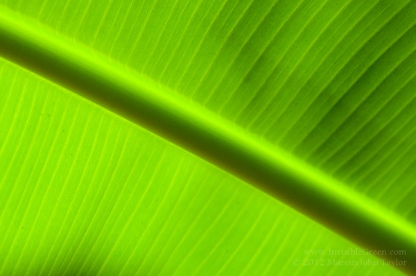 wpid-wpid-Banana_Leaf-4052.jpg
